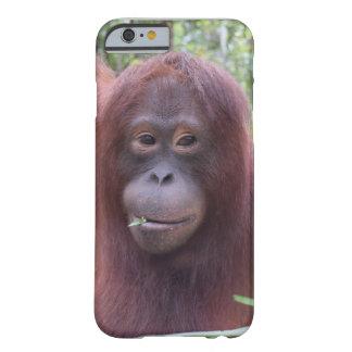 Ligón de la selva tropical de Borneo del orangután Funda Para iPhone 6 Barely There