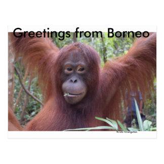 Ligón de la selva tropical de Borneo del orangután Postal