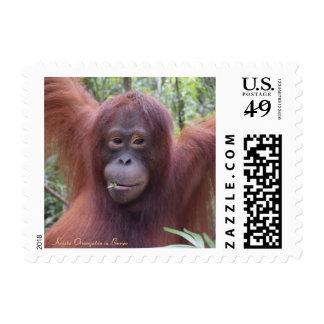 Ligón de la selva tropical de Borneo del orangután Timbres Postales