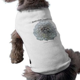 Like a Dog w/a Wishbone Pet Shirt