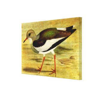 'Like a Lapwing' Canvas Print
