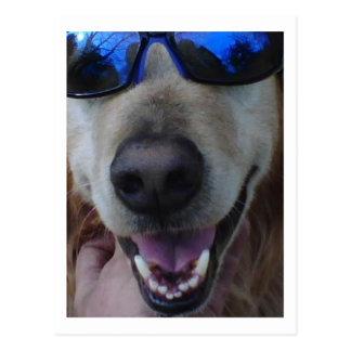 Like my shades? postcard