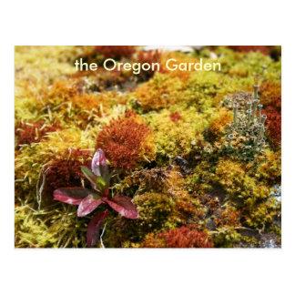 Likin' Lichen Postcards