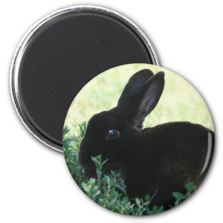 Lil Black Bunny 2 Inch Round Magnet