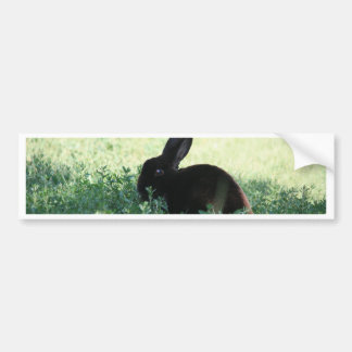 Lil Black Bunny Bumper Sticker
