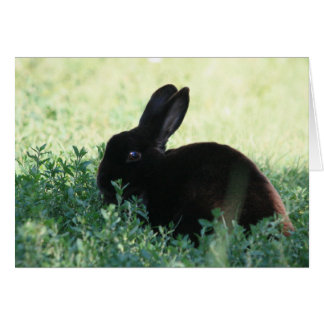 Lil Black Bunny Card