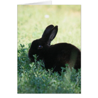 Lil Black Bunny Card