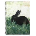 Lil Black Bunny Note Books
