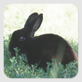 Lil Black Bunny Square Sticker