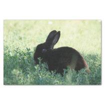 Lil Black Bunny Tissue Paper