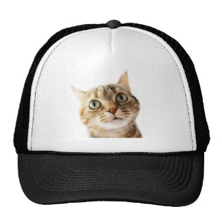 Lil Miss Cattitude Hat