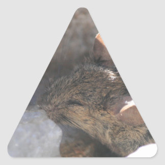 Lil Mouse Triangle Sticker
