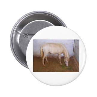 Lil Pony-2 Pinback Button