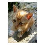Lil' Red Kitten Greeting Card