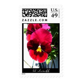 lil showoff stamps