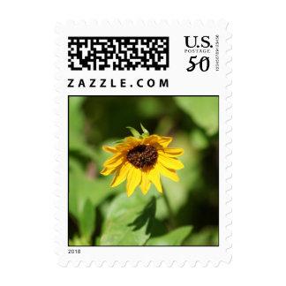 Lil' Sunflower stamp