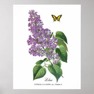 Lila botánica póster