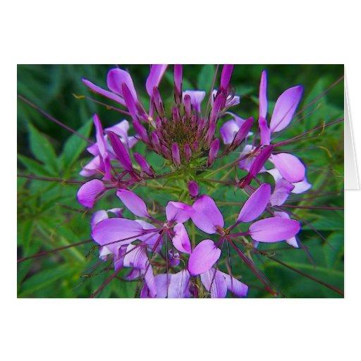 lila-floración tarjeta de felicitación