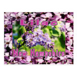 Lila - la flor de estado del NH