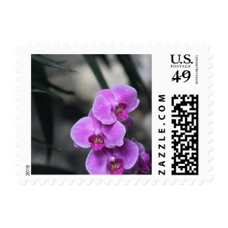 Lila Orchidee Postage Stamp