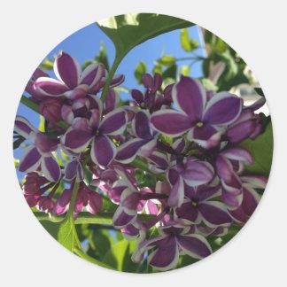 Lila púrpura franjada blanco pegatina redonda