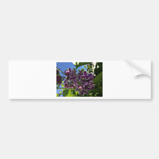 Lila púrpura franjada blanco pegatina para auto