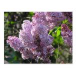 Lila púrpura tarjeta postal