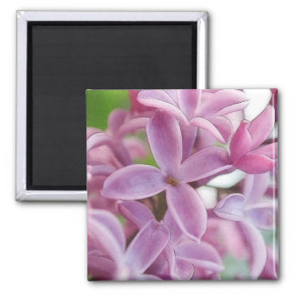 Lilac Bloom In Early Spring 2 Inch Square Magnet
