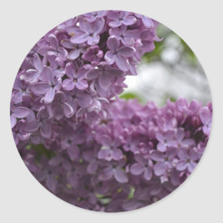 Lilac Blossoms Classic Round Sticker