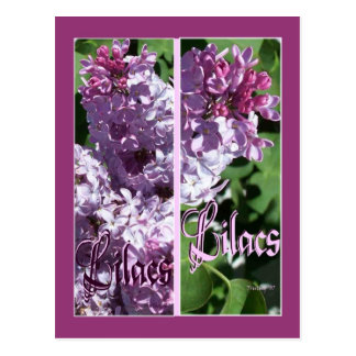 LILAC BOOKMARKS POST CARD