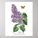 Lilac Botanical Poster