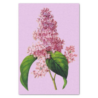 "Lilac Branch Botanical 10"" X 15"" Tissue Paper"