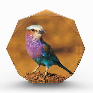 Lilac Breasted Bird Acrylic Award