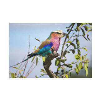 Lilac-Breasted Roller, Africa, Canvas Print