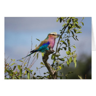 Lilac-Breasted Roller, Africa, Greeting Card