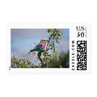 Lilac-Breasted Roller, Africa, Postage Stamp