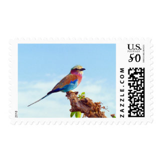 Lilac Breasted Roller Bird Colorful Africa Stamp