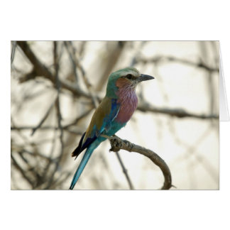 Lilac Breasted Roller Card