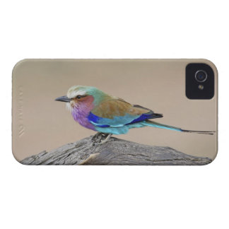 Lilac-breasted roller (Coracias caudata) Case-Mate iPhone 4 Case