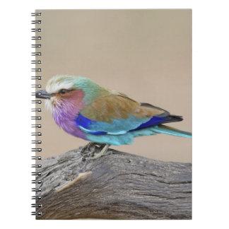 Lilac-breasted roller (Coracias caudata) Notebook