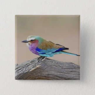 Lilac-breasted roller (Coracias caudata) Pinback Button