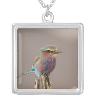 Lilac breasted Roller, Coracias caudata, Samburu Square Pendant Necklace