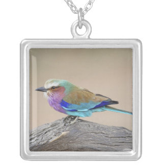 Lilac-breasted roller (Coracias caudata) Silver Plated Necklace