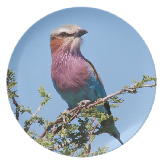 Lilac-breasted Roller Dinner Plate