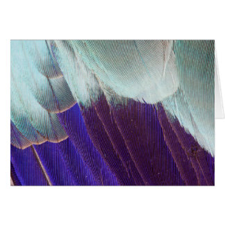 Lilac Breasted Roller Feather Abstract Card