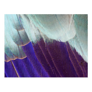 Lilac Breasted Roller Feather Abstract Postcard