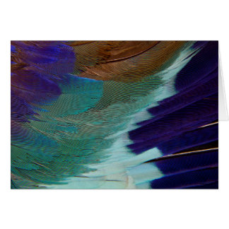 Lilac Breasted Roller feathers Card