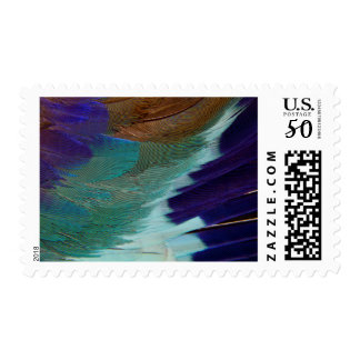 Lilac Breasted Roller feathers Postage