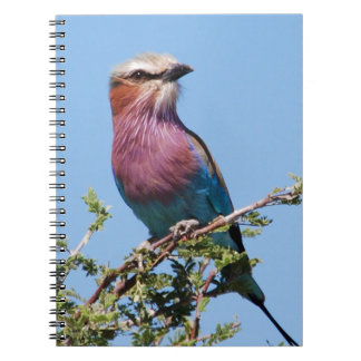 Lilac-breasted Roller Spiral Note Books