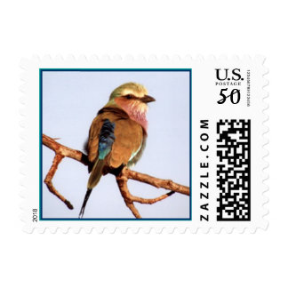 Lilac-breasted Roller Postage Stamp (SMALL)